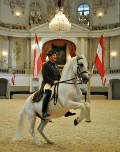 Things to do in Vienna April: Spanish Riding School Vienna: lipizzan horse
