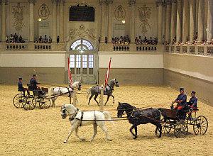 Spanish Riding School Vienna: Piber Meets Vienna show