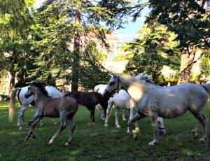 Vienna attractions: Lipizzaner Stallions