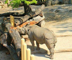 Schonbrunn Palace zoo