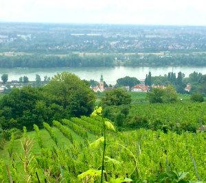 Aussicht vom Heuriger Hirt in Kahlenberg