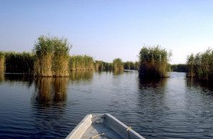 Austria Travel Guide: Lake Neusiedl