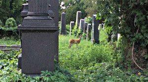 Central Cemetery Vienna: Jewish Cemetery