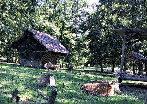 Empress Sissi palace: animal enclosure