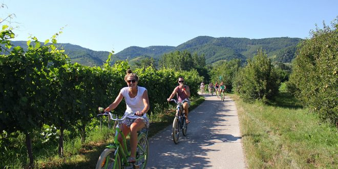 Wachau tour: biking group