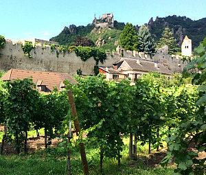 Duernstein vineyards