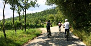 Vienna tours by bike: Vienna Woods