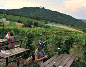 Vienna bicycle tour: Heuriger Sirbu