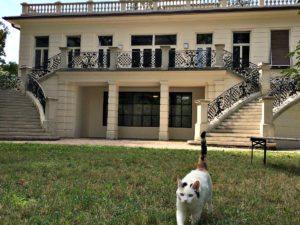 Klimt villa: garden with cat