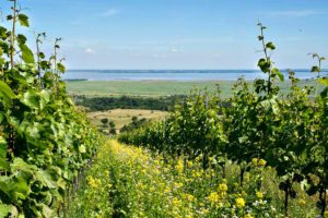 Burgenland winery tour: Hopler's vineyards
