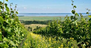 Burgenland: Vineyards and Neusiedlersee