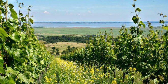Burgenland: Vineyards and Neusiedlersee