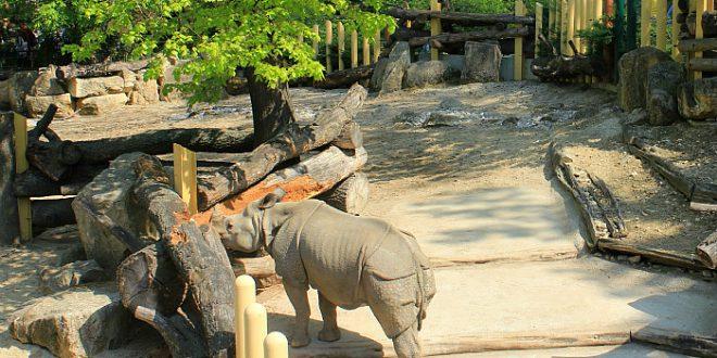 Vienna zoo: Rhino at Schonbrunn zoo