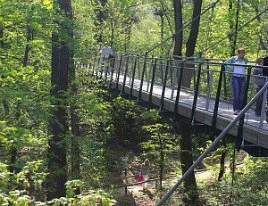 Vienna zoo: walking bridge