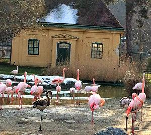 Vienna Zoo: flamingos and historic pavilion