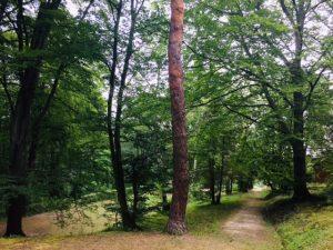 Vienna swimming pool: forest area of Neuwaldegger Bad