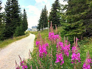 Vienna Alps: Rax hiking path