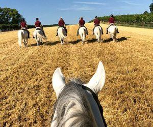 Lipizzaner Stallions at Heldenberg